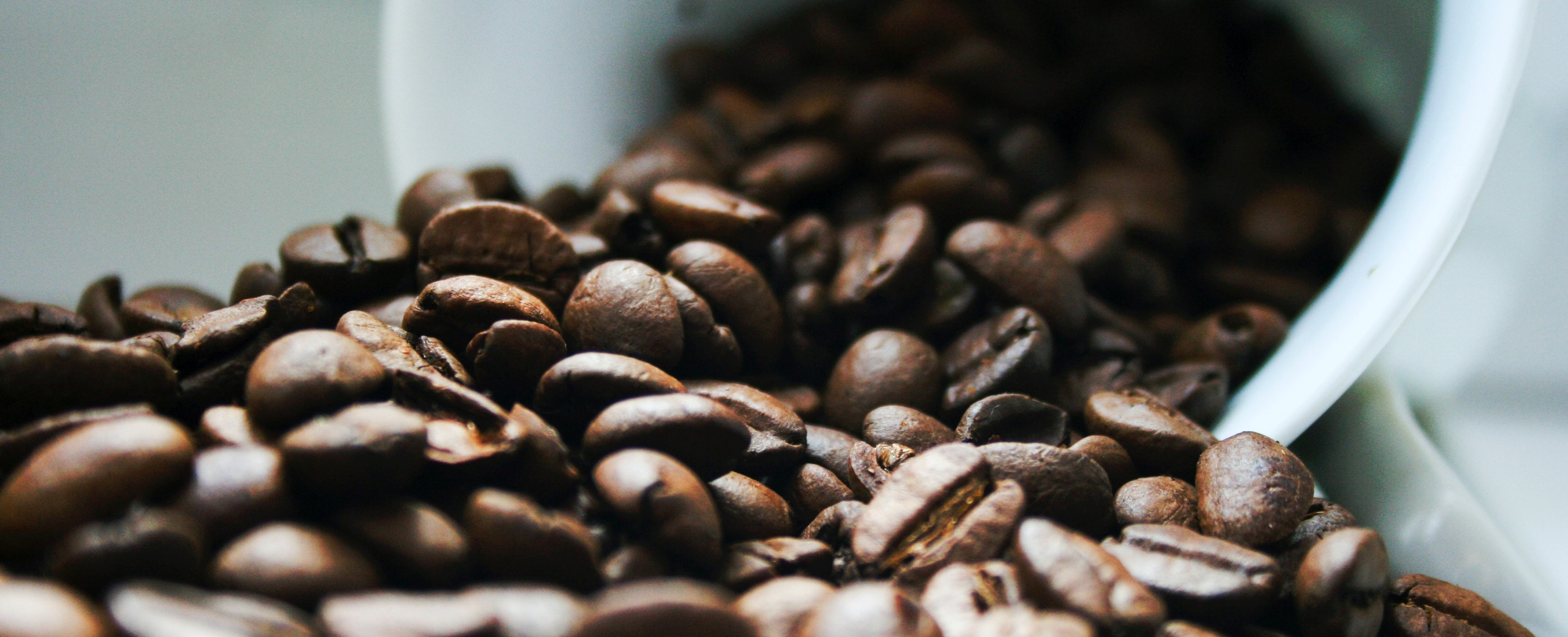 coffee beans_jolt-2